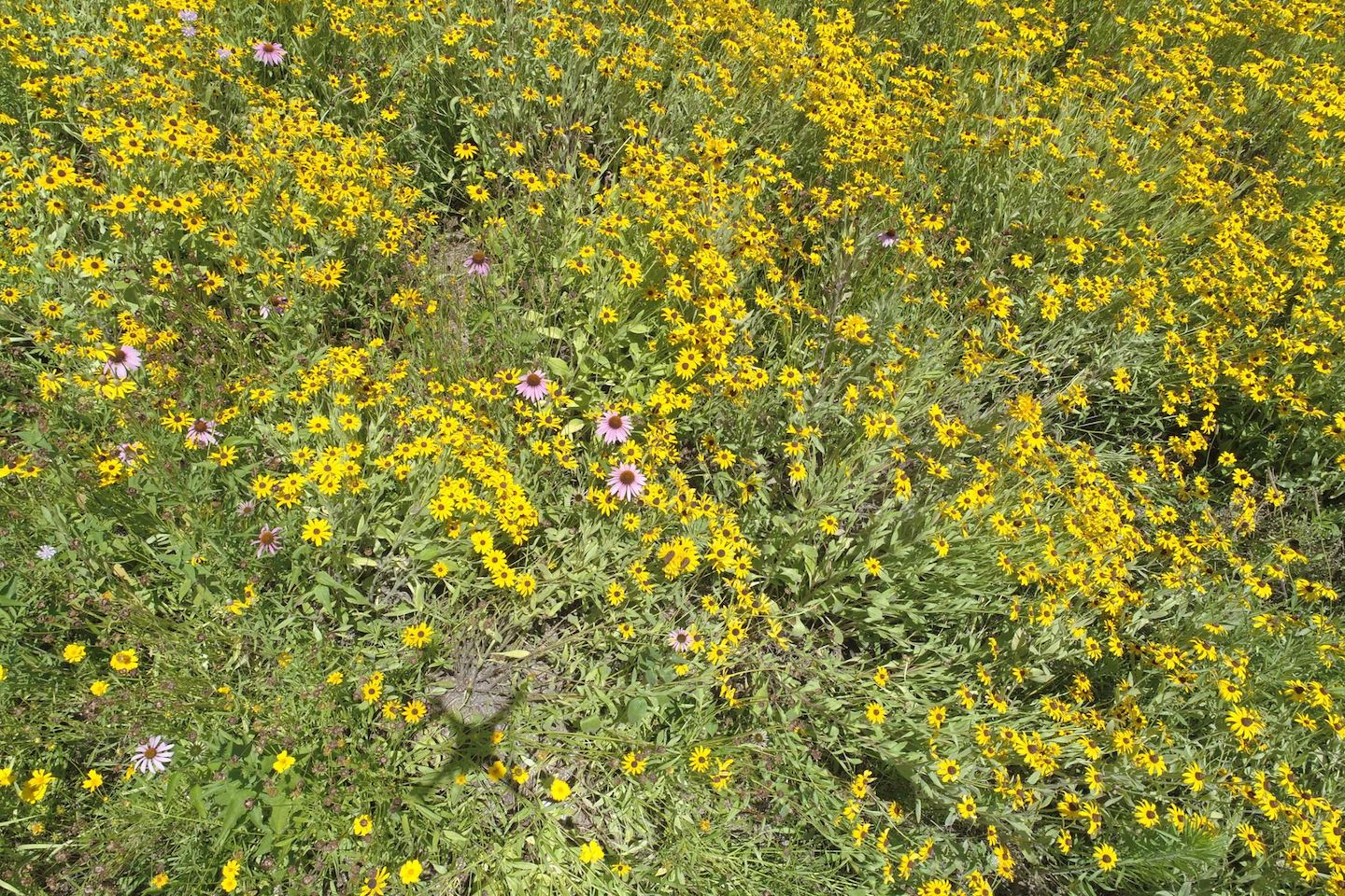 Austin Peay, TDOT partner on pollinator project at I-24's Exit 1