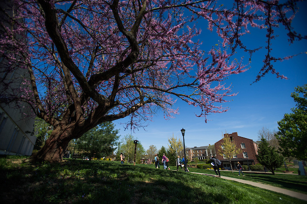 Campus trees in bloom