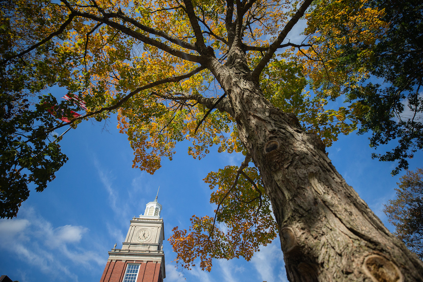 Austin Peay recognized as a Tree Campus USA for fifth straight year